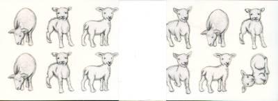 Lammas-tarrat (20 arkkia)
